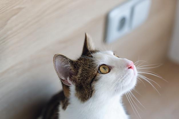Leuke jonge binnenlandse tweekleurige gestreepte kat en witte kattenzitting op plank, die zijaanzicht omhoog eruit zien. selectieve aandacht, kopieer ruimte