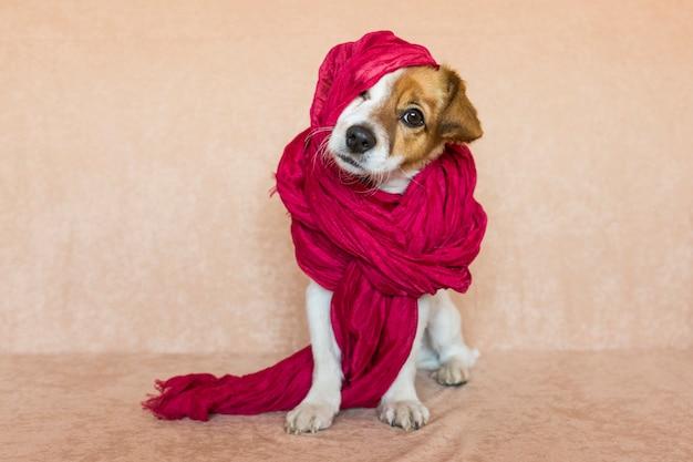Leuke jonge hond die de camera met een rode sjaal bekijkt.