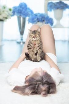 Leuke jonge kattenzitting op damekist en bekijkt camera, huisdieren of kattenminnaarconcept.