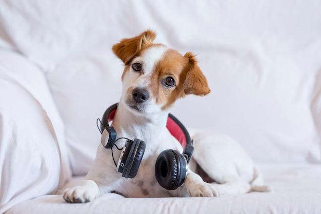 Leuke jonge kleine hond het luisteren zitting op de bank met hoofdtelefoons.