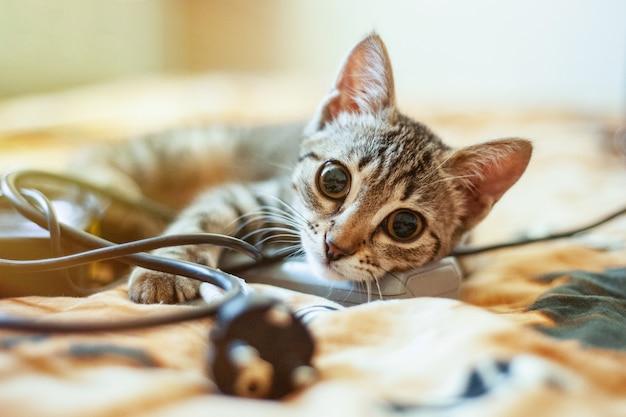 Leuke kat die op het bed ligt en de camera bekijkt. detailopname