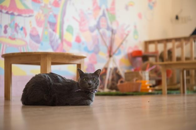 Leuke kat in het café