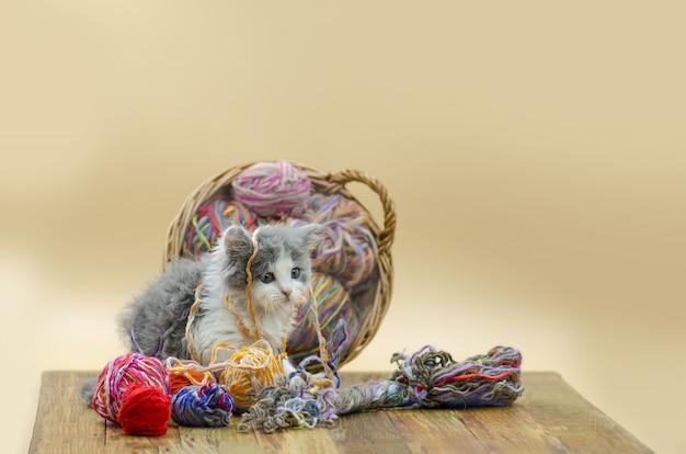 Leuke kat met kleurrijke wol garen ballen