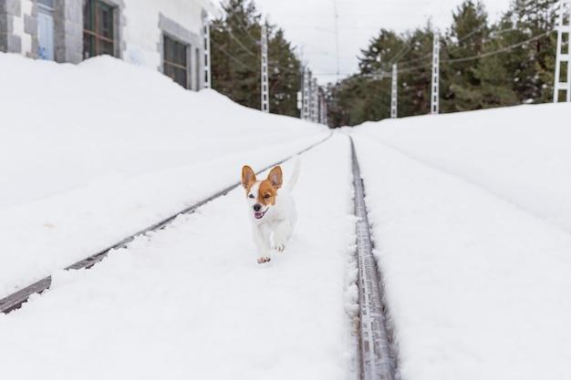 Leuke kleine hond die in de sneeuw in een station loopt. grappige oren en gelukkige hond. winter concept. huisdieren buiten