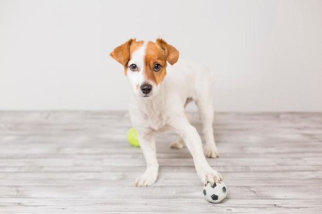 Leuke kleine hond spelen met een tennisbal en plezier maken
