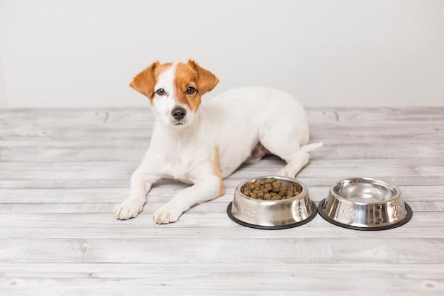 Leuke kleine hond zitten en wachten om zijn kom hondenvoer te eten