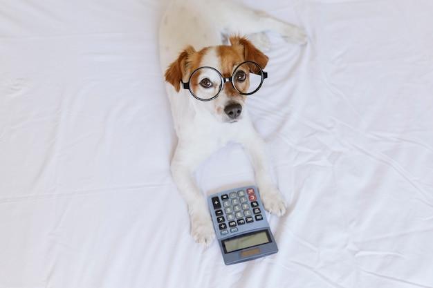 Leuke kleine hondaccountant die en met calculator op bed denken berekenen