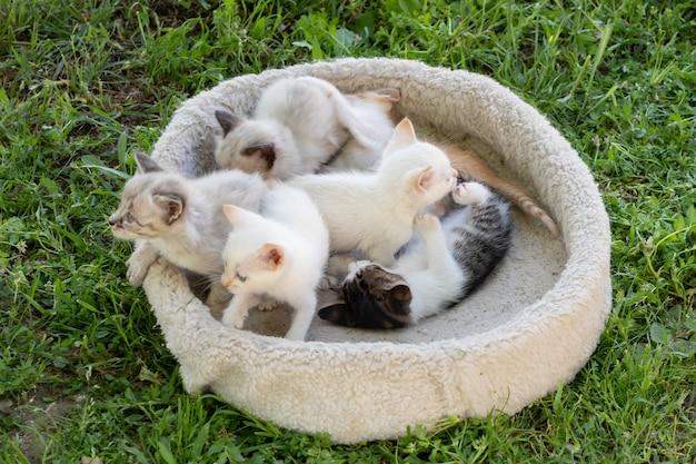 Leuke kleine kittens in hun bed op het gras