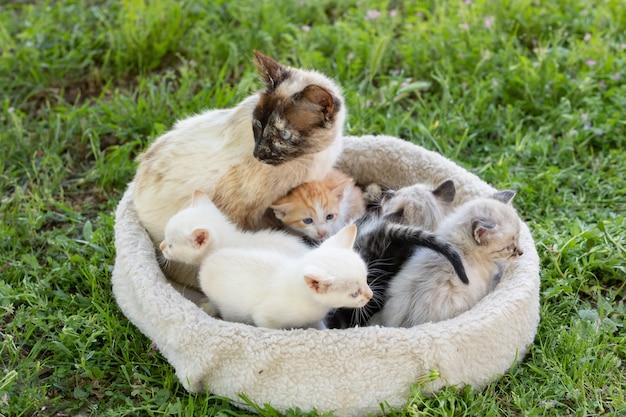 Leuke kleine kittens met hun moeder in bed