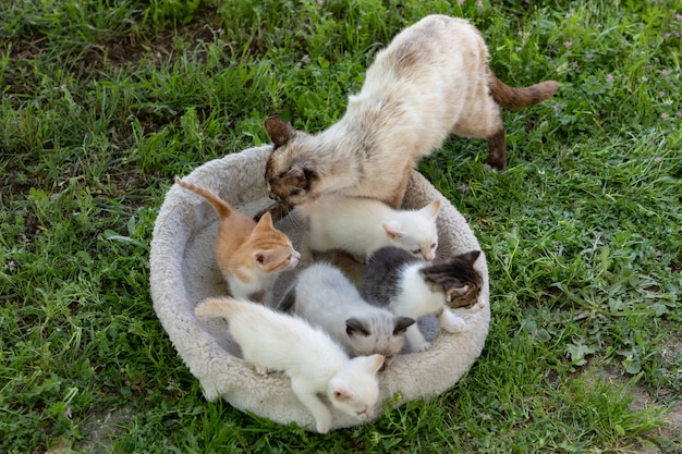 Leuke kleine kittens met hun moeder