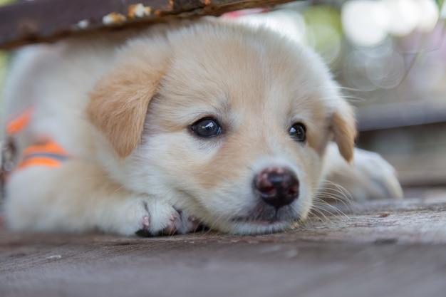 Leuke kleine puppy's zitten te hurken en zoeken naar spel op de vloer