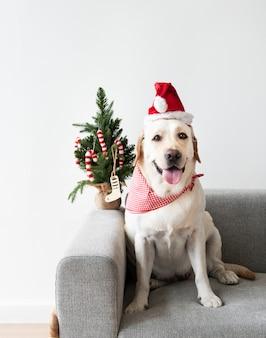 Leuke labrador die een kerstmishoed draagt