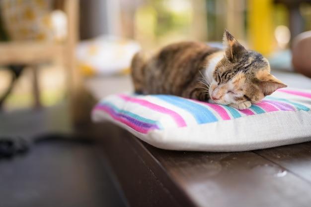 Leuke lapjeskat slapen op het kussen