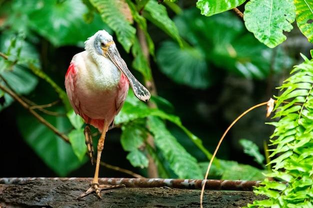 Leuke lepelaarvogel die op een boomtak wordt neergestreken met vaag