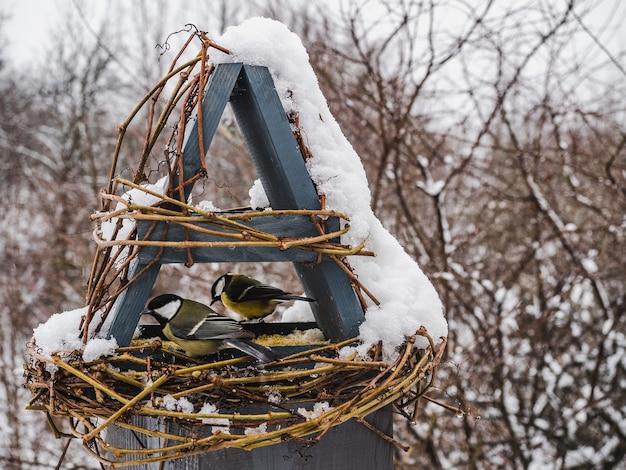 Leuke, mooie vogels in een rieten voederbak. close-up, buitenshuis. daglicht. dierlijke zorg concept
