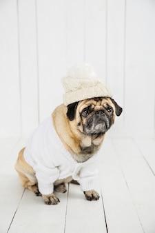 Leuke mopshond die witte sweater en hoed draagt