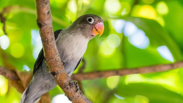 Leuke papegaai in tropisch bos. maldiven. wild natuur.