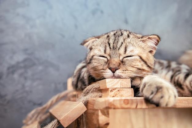 Leuke perzische kat slapen op houten balk in de buurt van betonnen muur en gesloten ogen