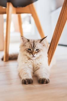 Leuke pluizige binnenlandse kat, zittend op de vloer