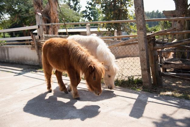 Leuke pony in de dierentuin