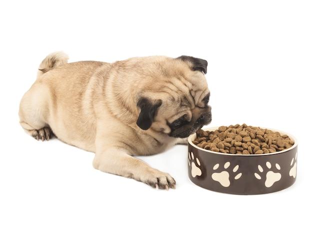 Leuke pug met een kom van droog voedselclose-up dat op witte achtergrond wordt geïsoleerd