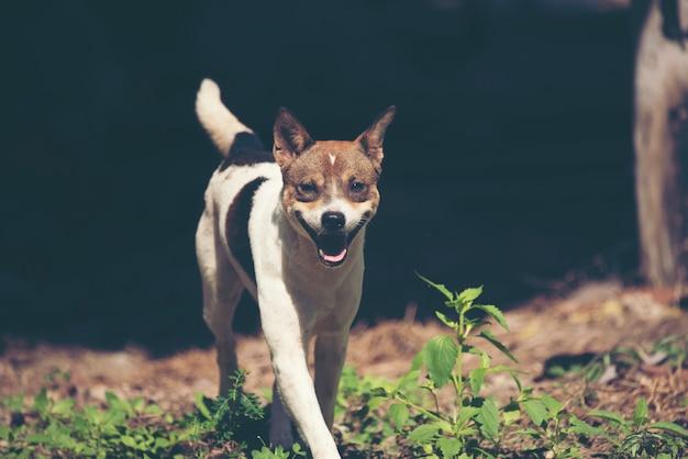 Leuke puppyhond die in de weide loopt.