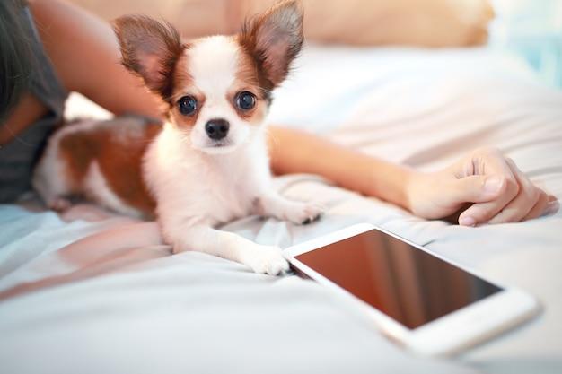 Leuke puppyhond met slimme telefoon
