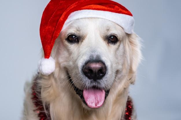 Leuke retriever die een kerstmuts draagt