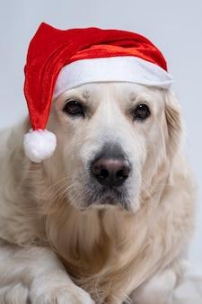 Leuke retrieverhond die een kerstmuts draagt