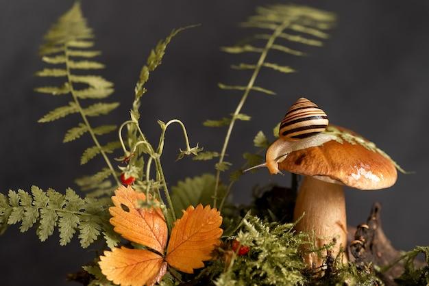 Leuke slak met gestreepte shell zit op de bovenkant van grote boletuspaddestoel die door mos en gevallen bladeren in het bos groeit