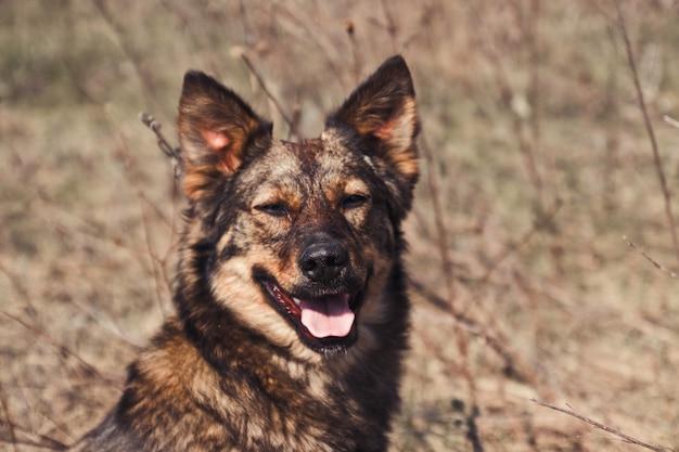 Leuke speelse bruine hond met tong uitsteekt of huisdier koesterend in de zon in het park. geluk tijd