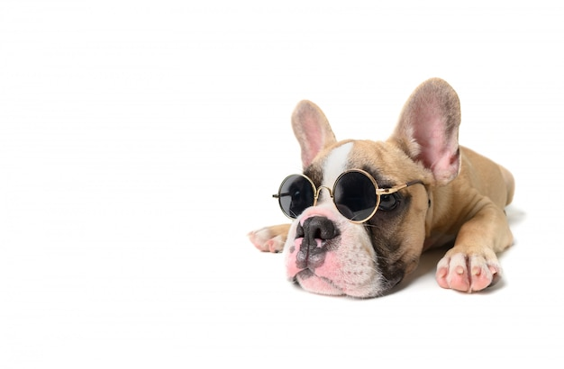 Leuke sunglass van franse bulldogslijtage