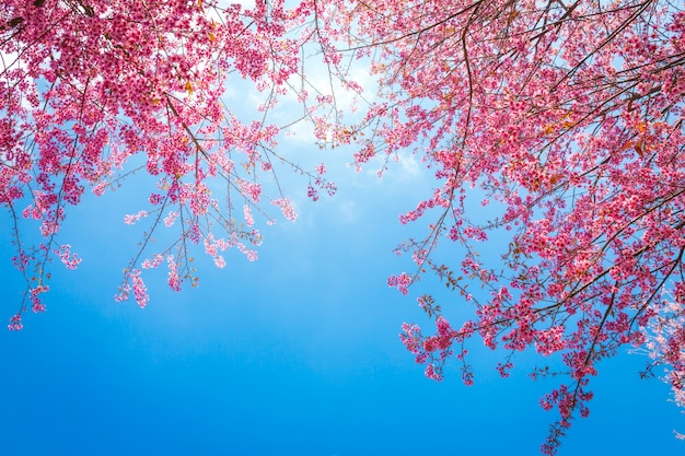 Leuke takken met roze bloemen