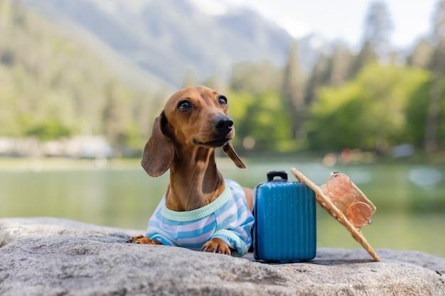 Leuke teckelhond op een reishond zit in de buurt van het water met een koffer op zeevakanties