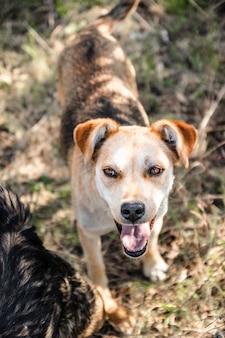 Leuke verdwaalde hond met bruine ogen die uit zijn tong op een zonnige dag buiten plakken