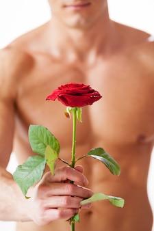 Leuke verrassing voor haar. close-up van jonge gespierde man met perfecte torso die enkele roos vasthoudt terwijl hij tegen een witte achtergrond staat