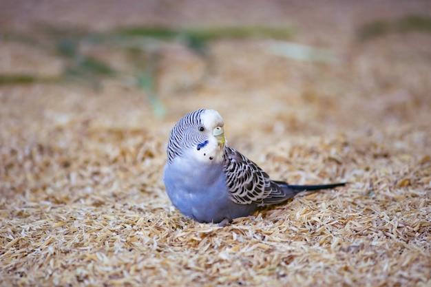Leuke vogel op de boerderij