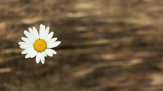 Leuke wilde bloem met exemplaarruimte
