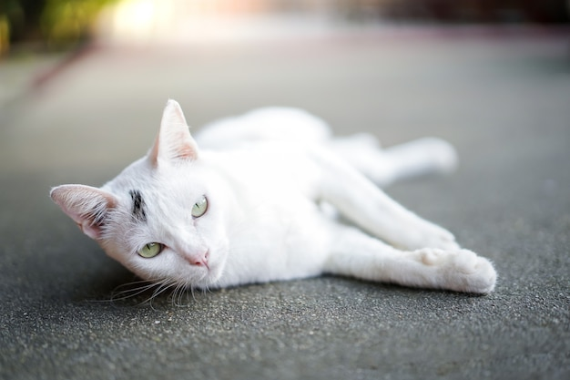 Leuke witte kat die op concrete straat dicht omhoog legt.
