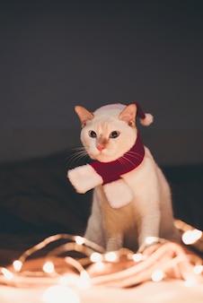 Leuke witte kat in rode santa claus-hoed tegen vage kerstmislichten in slaapkamer
