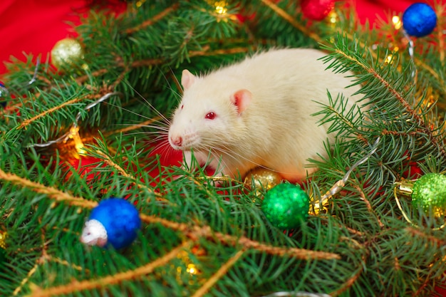 Leuke witte rat en kerstboom. nieuwjaar en kerstmis concept.