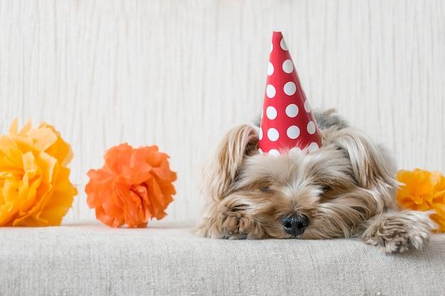 Leuke yorkshire terrier (yorkie) hond in rode feestmuts glb ligt op tafel