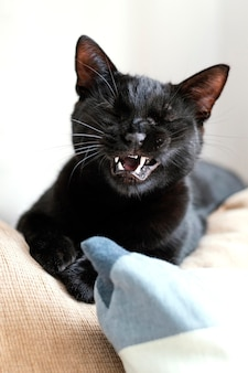 Leuke zwarte kat die op bank legt