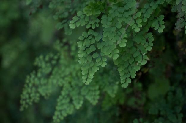 Levada van caldeirao verde