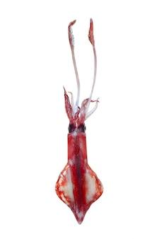 Levend inktvis zeevruchten geïsoleerd