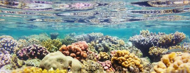 Levend koraalrif in de rode zee, egypte.