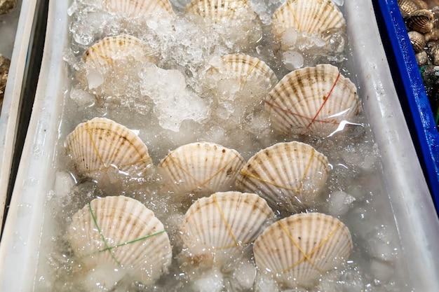 Levende witte sint-jakobsschelpen, in een plastic doos in ijswater, worden verkocht in de buurt van een visrestaurant, opgewikkeld met tape.