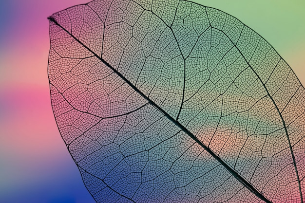 Levendig abstract groen herfstblad