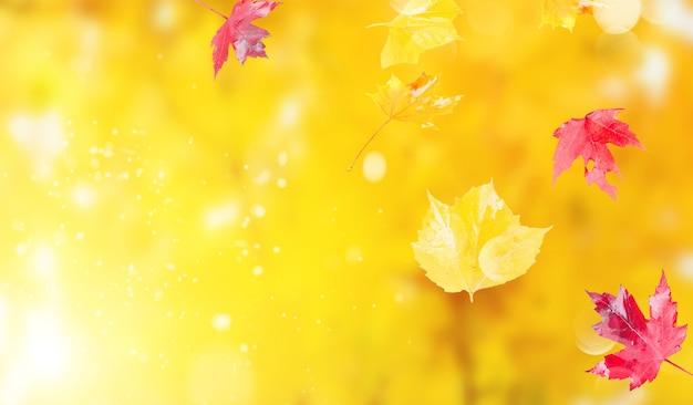 Levendig herfstgebladerte