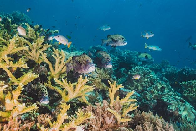 Levendige rifvissen voeren op plankton boven een koraalrif in indonesië